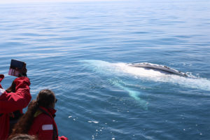 Great opportunity to take close up photos of whales