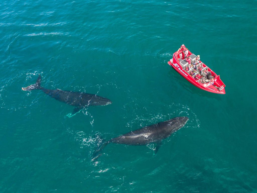 The best whale watching experience in the South West of Western Australia