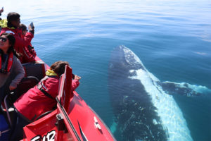 View whales from the waterline