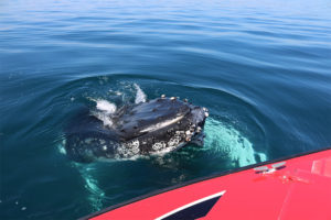 Whales come right up to the boat