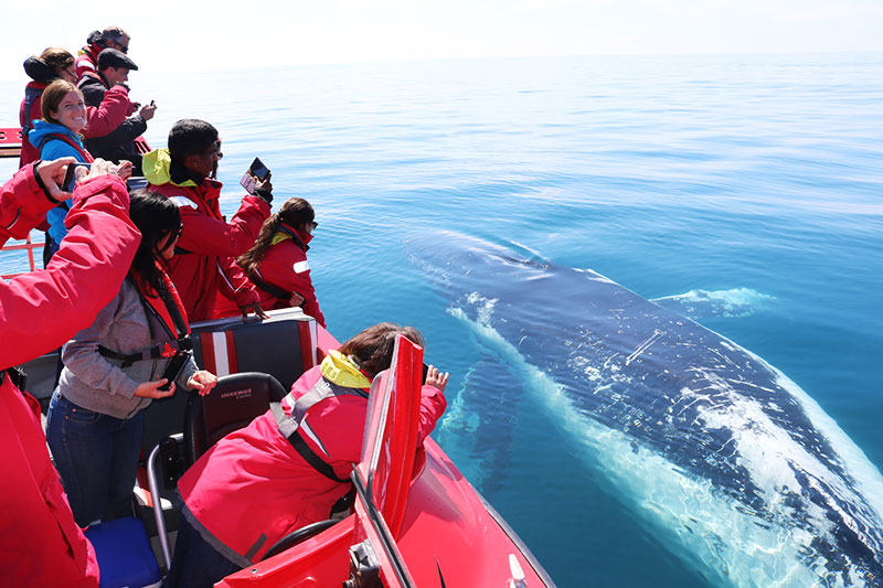 Small group whale watching
