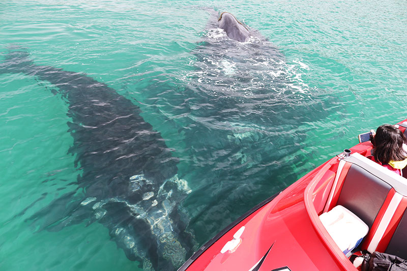 Whales so close you could touch them