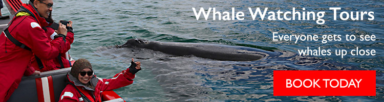 Everyone gets to see whales up close