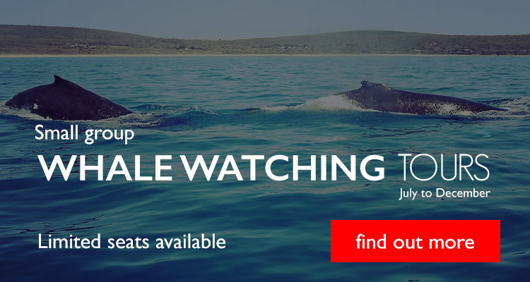 Small Group Whale Watching Tours Dunsborough
