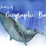 Whales of Geogrpahe Bay